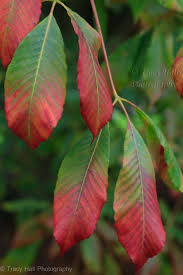 red green color combination 175 best red u2022green mood images on pinterest nature blossoms and