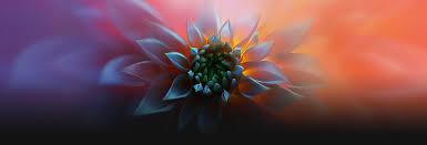 flower pro desktop new macbook pro pink flower wallpaper macrumors forums