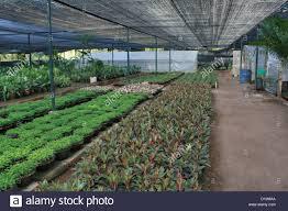 ornamental plants nursery chennai tamil nadu stock photo