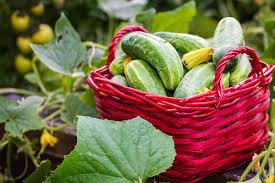 starting a home vegetable garden home matters ahs