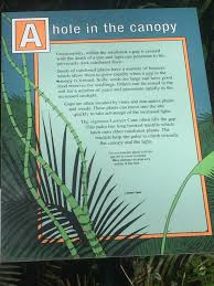 native rainforest plants australia u2013 queensland