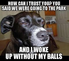 No Trust Meme - no trust meme by xwolfgames memedroid