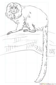 how to draw a golden lion tamarin monkey step by step drawing