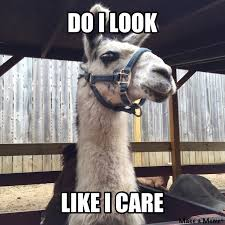 Llama Meme - do i look like i care llama meme my own creation let s see