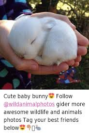 Baby Animal Memes - cute baby bunny follow gider more awesome wildlife and animals