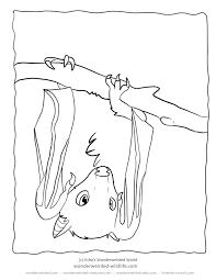 bat coloring pages fruit bat pictures free to print bat family