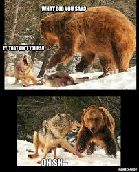Bear Stuff Meme - wolf vs bear meme by memecomedy on deviantart