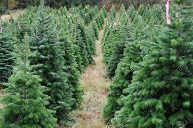 to buy christmas tree christmas lights decoration