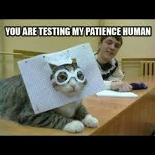 Hat Meme - and now cats in hats more cat memes casandersdotnet