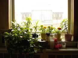 Kitchen Window Sill Ideas Windows Windowsill Plants Decor Window Designs Modern Interior