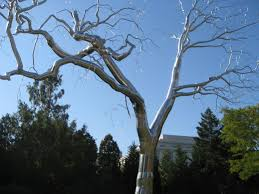 graft tree sculpture by paine is inspiring symbol for the