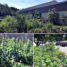 why plant native plants pulley career pulleycenter twitter
