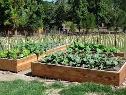 Raised Vegetable Garden Ideas Raised Vegetable Garden Ideas