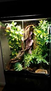 8 best my pets images on pinterest exo bearded dragon cage and
