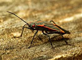 the top 10 wisconsin insect trends of 2016 wiscontext