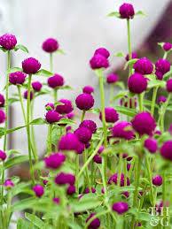 Pretty Flower Garden Ideas Garden Flowers Capnhat24h Info Capnhat24h Info
