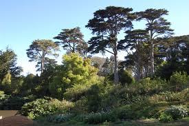 Photography Workshop With Saxon Holt At The San Francisco Botanic
