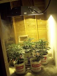 small grow room design home design