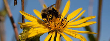Flowers Bees Pollinate - bees and flowers bee lab