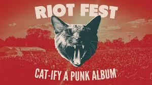 cat photo album riot x do312 s cat ify a album contest riot