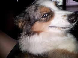 Sexy Face Meme - my dog has a sexy face meme guy