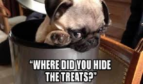 Funny Pug Memes - 18 best pug memes of all time