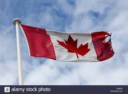torn canadian flag stock photo royalty free image 38299206 alamy