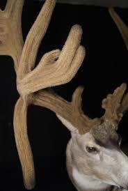 fake deer velvet replication antlers by klaus