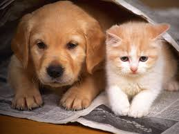 cat and dog u2013 relationship information and gallery take a quick