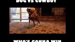 boxer halloween costume for dog boxer dog vs cowboy costume youtube