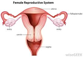 Female Breast Anatomy And Physiology Human Anatomy What Is Female Anatomy Anatomy Of The Breast
