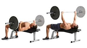 What Muscle Do Bench Press Work 2 Answers Can Weighted Dips Completely Replace The Bench Press