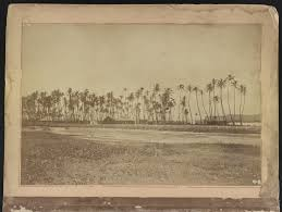 hawaii photo album file hawaii album p 1 palm trees and buildings jpg wikimedia
