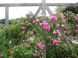 Rose Trellises Do Your Garden Plants Attract Pests Angie U0027s List