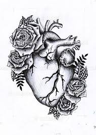 this is my passion the anatomy of the heart the physiology of