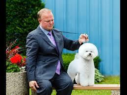 bichon frise kennels lore bichon frise puppies for sale