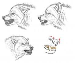 how to draw an angry wolf step by step forest animals animals
