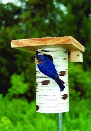 amazing bluebird feeder plan 42 bluebird jail feeder plans