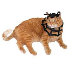 Halloween Costumes Cats Wear Pet Costume Sets Pet Halloween Costumes Target