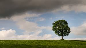 single tree at the horizon looped time lapse background backdrop