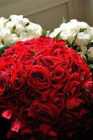 ravishingly red roses