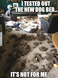 Dog In Bed Meme - i tested out the new dog bed dog meme