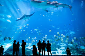 learning to love aquatic animals can teach kids to care about the