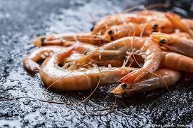 cuisiner des crevettes tout savoir sur les crevettes et astuces pour les cuisiner i régal