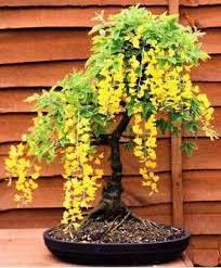 inspiration of the week 12 impressive japanese garden with bonsai