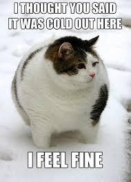 Fat Cat Heavy Breathing Meme - cat heavy breathing chipotle lekton info