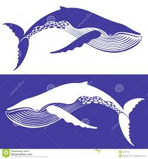 whale royalty free stock photography image 32467547