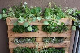 best new york gardening blogs apartment therapy