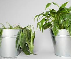 plant bot the world u0027s first robot turns household plants into