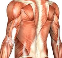 Human Anatomy And Physiology Courses Online Anatomy Online Course Aapc